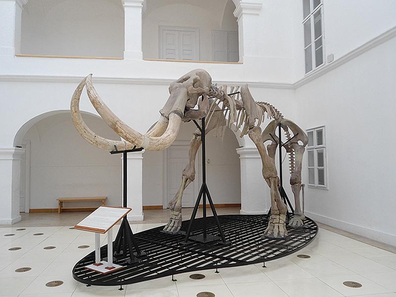 A mátraderecskén talált mamutcsontváz