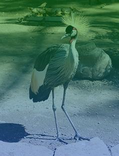 Séta a fővárosi állatkertben