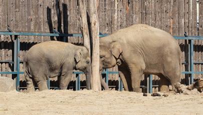 Séta az állatkertben – 2015.10.04.