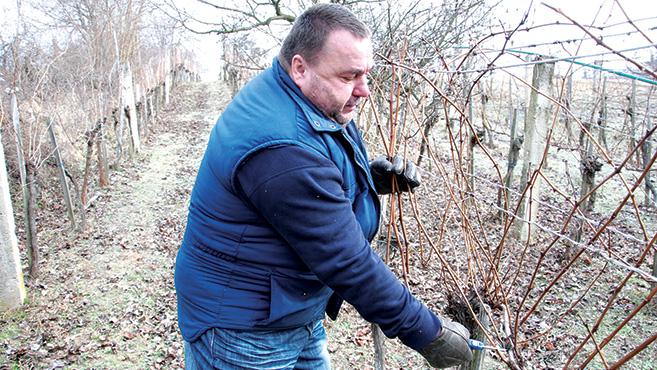 Meghinteni a szőlő négy sarkát